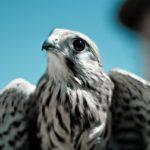 能ある鷹は爪を隠す、だから相手をみくびったら負け